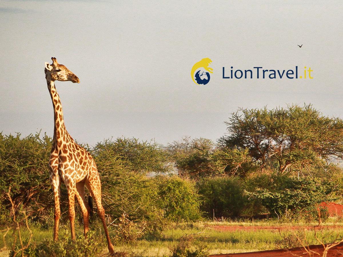 Tour su misura in Kenya