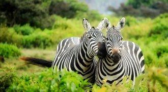 Safari ed avventure in Kenya