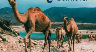 Oman - L'essenziale