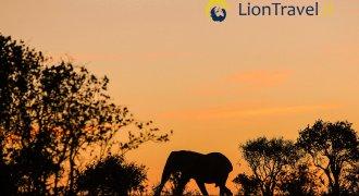 4 giorni tra Tsavo, Amboseli e Taita Hills